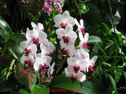 Many Different Beautiful Types of Orchids are in in the Flower Dome
