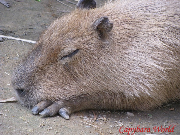 Donguri sleeping