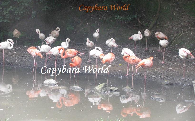 NWN flamingos Biopark 2012