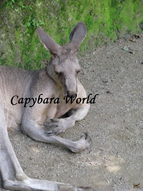 NWN Wallaby surprised how soft fur