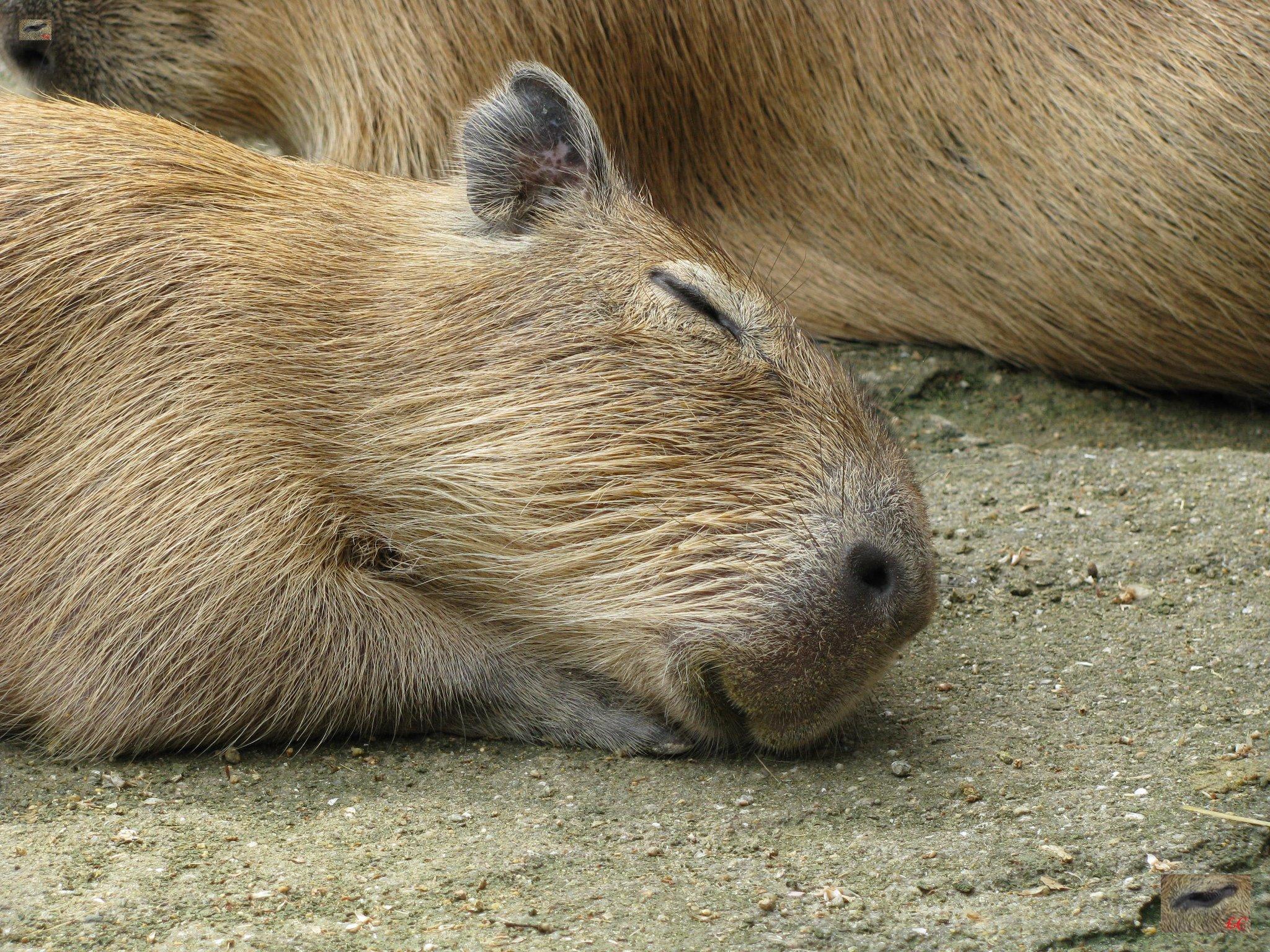 Little Baby Io Dreaming リトルベイビーイオドリーミング