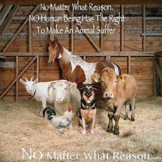 No Human Being has the Right to Make an Animal Suffer