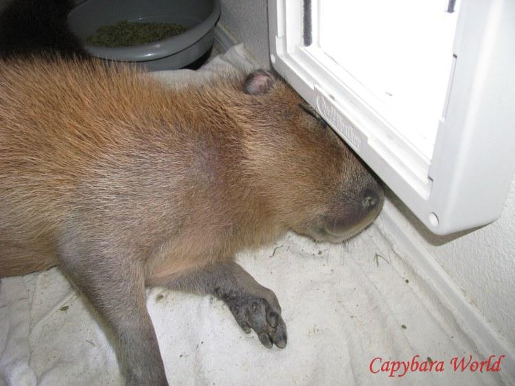 I Could Sleep Anywhere