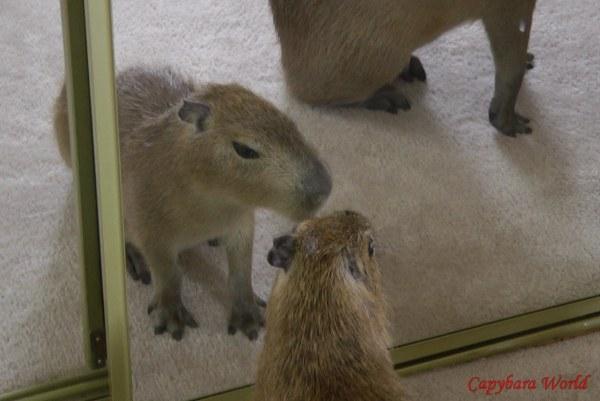 Tuff'n Looks in the Mirror. 鏡の中のルックスを強化