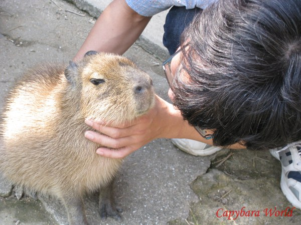 Choco is about to be kissed. I was trying to decipher the look on his face. I think he looks a little sultry.   チョコはキスをする! 幸せそうに見える?わからない。