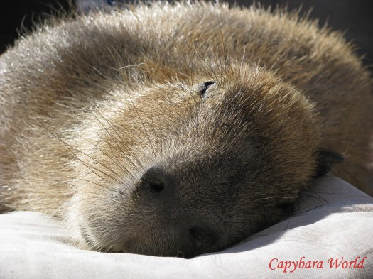 Tuffin naps