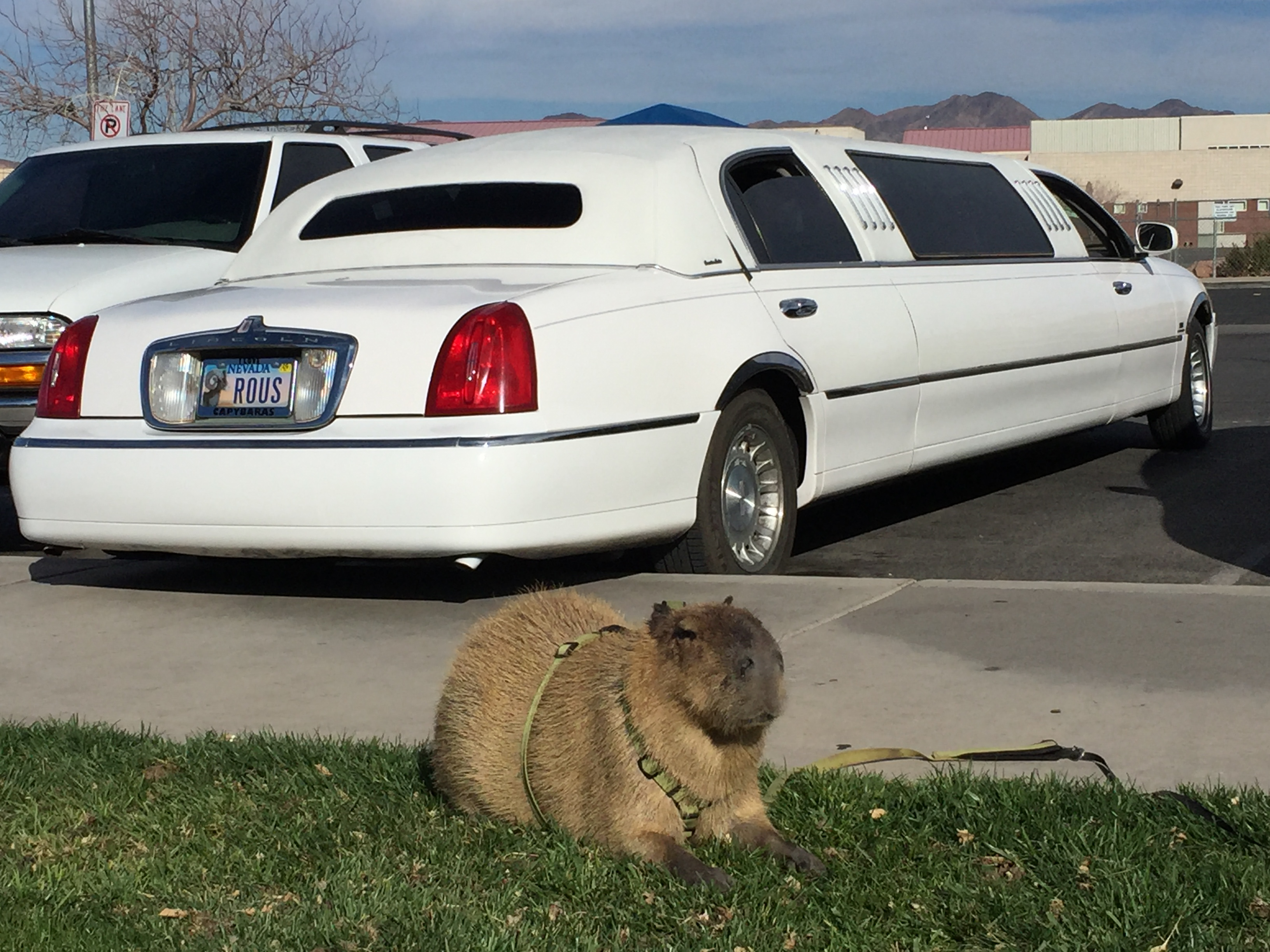 Romeo in front of his new LIMO 28 February 2016