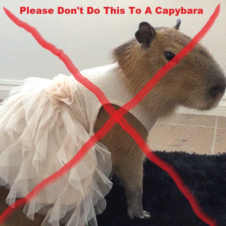 Capybaras do not like to wear clothes. Dressing a pet capybara causes stress and interferes with the bond between the capybara and the human, as the capybara cannot understand why the human is doing this to him