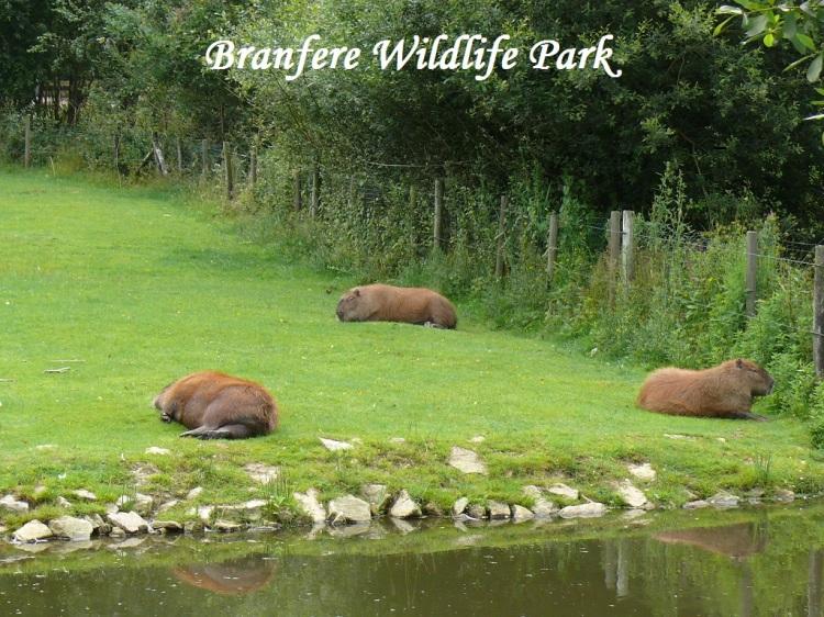 wn-branfere-july-2012-murmel-tier