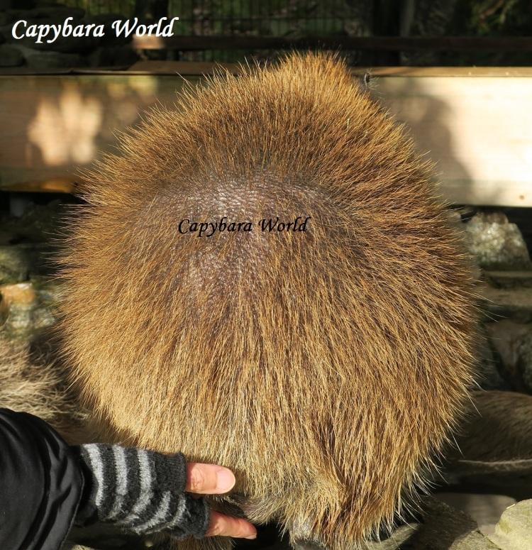 NWN 40% crop Syrup Q best sparse hair 28 Dec 2016 070